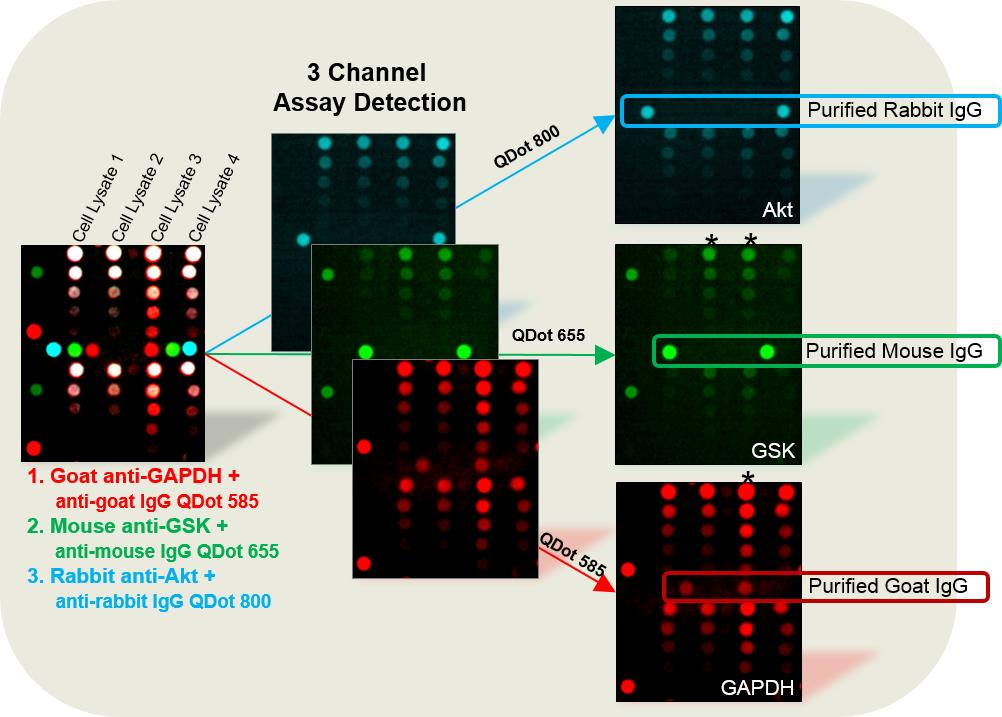 3-channel assay detection
