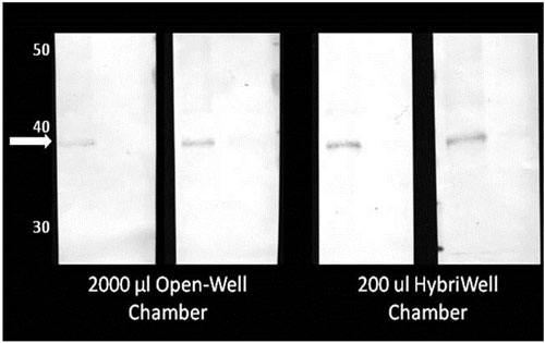 Results achieved with the HBW2260-FL HybriWell and open well