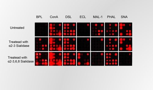 GLycan Array with PATH microarray slides