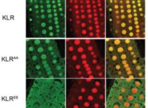 Plant kinase biosensors