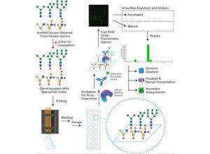 Glycan Microarray